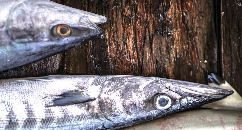 USFDA advises pregnant women to avoid consuming fish with high mercury levels