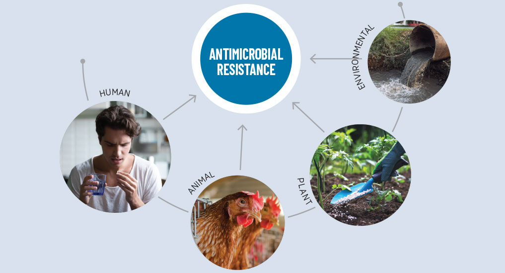 'One Health' approach to tackle AMR