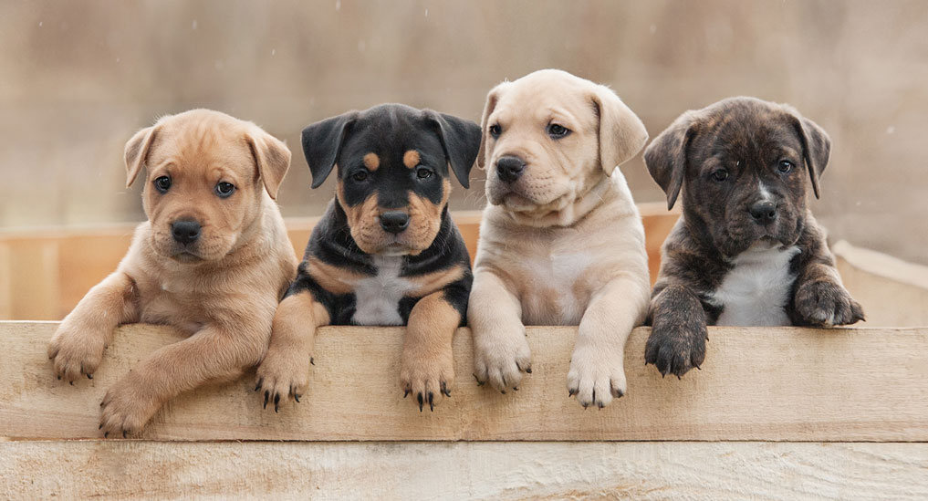 People with covid infection should avoid their pets